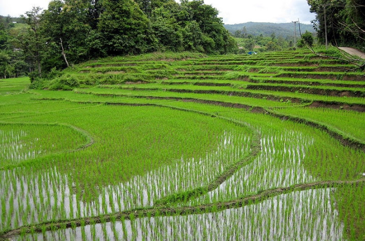 Farm in Rural Japan