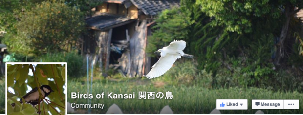 Birds of Kansai on Facebook - join the natural community